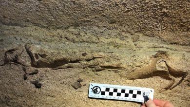 Photo of Археологи знайшли останки акули, яка жила 330 млн років тому
