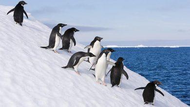 Photo of Вчені стверджують, що зміни клімату приведуть до Антарктиди нові види тварин