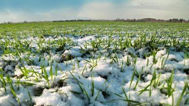 Photo of Метеорологи пояснили причину аномально теплої зими у 2020 році