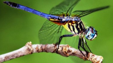 Photo of Повне вимирання загрожує півмільйону видів комах