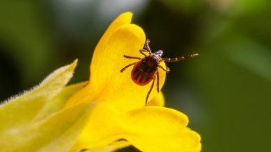 Photo of Весняні кліщі: як уберегти домашніх улюбленців від паразитів