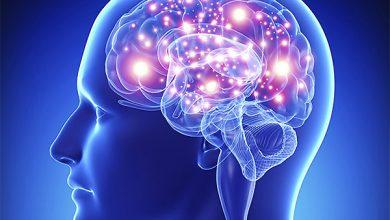 Photo of Вчені з'ясували – які ділянки мозку відповідальні за ревнощі та заздрість