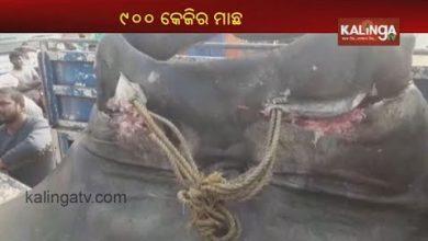 Photo of В Індії зловили рідкісну рибу вагою у тонну