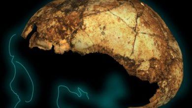 Photo of У Південній Африці археологи знайшли найдавніший череп предка сучасної людини