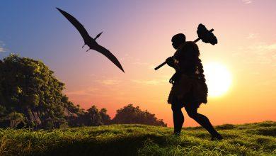 Photo of Вчені з'ясували, що неандертальці вміли полювати на птахів