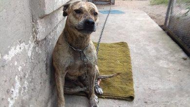 Photo of В Україні на аукціоні продали собаку за борги