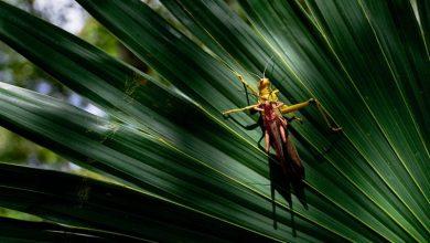Photo of На Землі катастрофічно зменшилася кількість комах