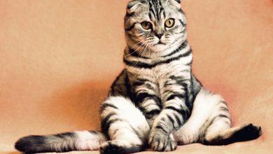 Photo of Цікавий факт, який повинні знати всі власники котів: наукове дослідження