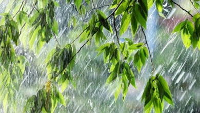 Photo of 40 градусів тепла і дощі: синоптики розповіли, якою буде погода у червні