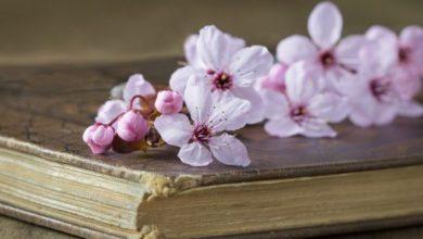 Photo of Що почитати вдома: топ-7 найкращих романів про кохання