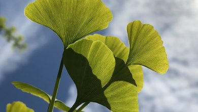 Photo of Названо 6 найефективніших противірусних рослин