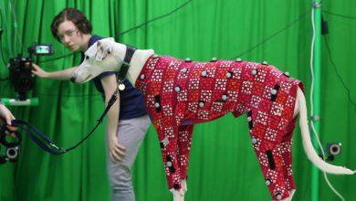 Photo of Британські вчені придумали, як оцифрувати тварину