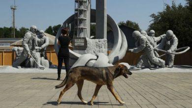Photo of Чорнобильські собаки стали справжніми зірками серед туристів з усього світу