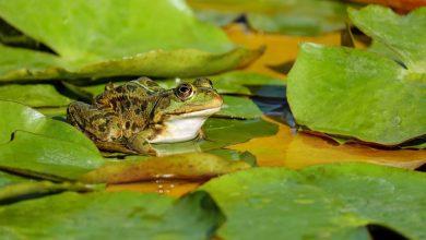 Photo of В Україні будуть виробляти жаб'яче м'ясо