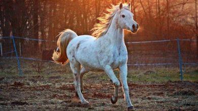 Photo of Де в Києві можна покататися на конях: огляд кінних клубів
