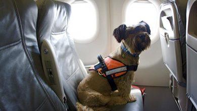 Photo of Перевезення тварин в МАУ: авіакомпанія прийняла жорстке рішення