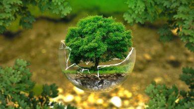 Photo of Всесвітній день охорони довкілля: 5 цікавих фактів про навколишнє середовище