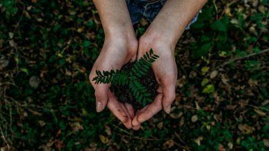 Photo of 5 невеликих справ, які допоможуть врятувати нашу планету