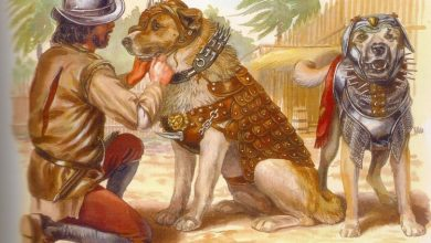 Photo of За яким принципом древні люди обирали собі собак: дослідження