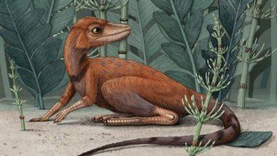 Photo of Вчені з'ясували, що перші динозаври були невеличкими і полювали на комах