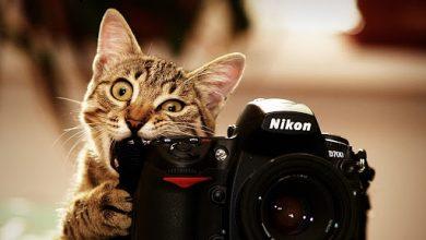 Photo of У Києві планують заборонити фото і відеозйомку з тваринами за гроші