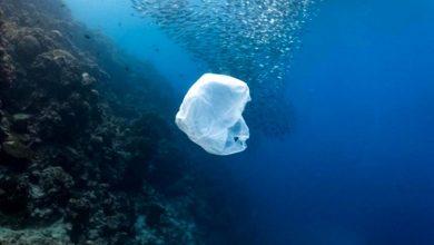 Photo of Створено біопластик, який повністю розкладається в морській воді