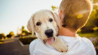 Photo of Як собака впливає на розвиток дитини: наукове дослідження