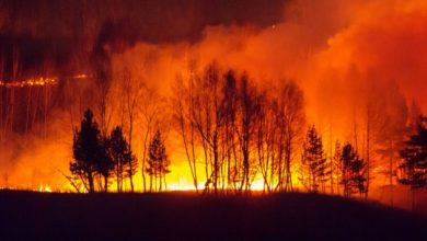 Photo of У Сибіру зафіксували аномальну спеку