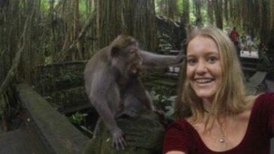Photo of Мавпа ледь не роздягла туристку на Балі: як це трапилось