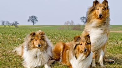 Photo of Названо новий метод перерахунку віку собак у людські роки