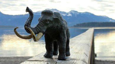Photo of В озері на Ямалі виявили останки мамонта