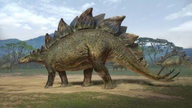 Photo of Вчені виявили, що динозаври хворіли на рак