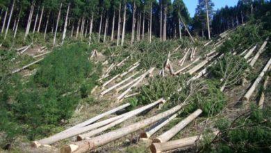 Photo of Дві області України через 30-40 років можуть залишитись без лісів – дослідження