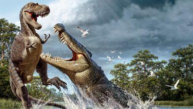 Photo of Вчені з'ясували, що гігантський доісторичний крокодил полював на динозаврів