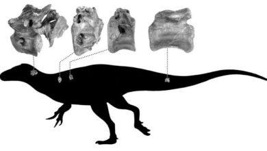 Photo of Британські вчені відкрили новий вид динозаврів