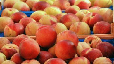 Photo of Закарпатські фермери змайстрували колію для транспортування персиків (ВІДЕО)