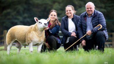 Photo of У Шотландії продали найдорожчу вівцю у світі
