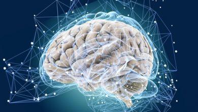 Photo of Що важливо знати про роботу мозку, щоб змінити своє життя: цікаві факти