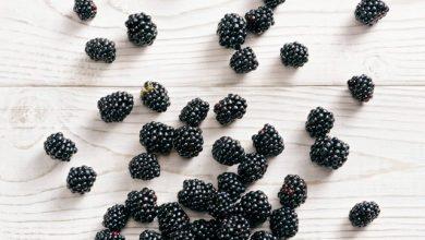 Photo of Корисні властивості ожини: чому варто додати сезонну ягоду у свій раціон