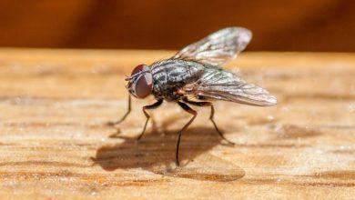 Photo of У Франції пенсіонер підірвав свій будинок, намагаючись вбити муху