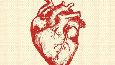Photo of Всесвітній день серця: 10 цікавих фактів про головний орган «життя
