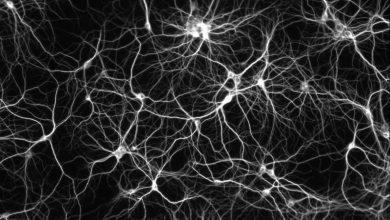 Photo of Вчені стверджують, що клітина людського організму являє собою Всесвіт у мініатюрі