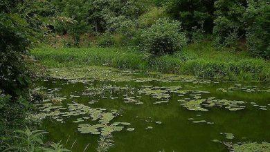 Photo of В Україні масово висихають болота та зникають степи