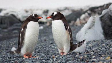 Photo of Вчені знайшли в Антарктиді кладовище пінгвінів, якому тисячі років