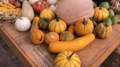 Photo of Їжа вересня: топ-5 продуктів, на які варто звернути увагу