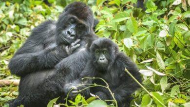 Photo of У світі масово вимирають дикі тварини – дослідження