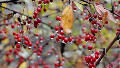 Photo of Корисні ягоди осені: що потрібно купувати