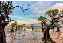 Photo of Як виглядають мангрові ліси – легені нашої планети: фото