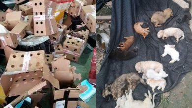 Photo of У Китаї знайшли на складі 5000 мертвих домашніх тварин