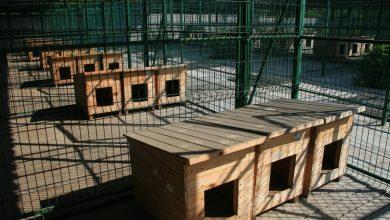 Photo of У Борисполі відкрили комунальний притулок для тварин